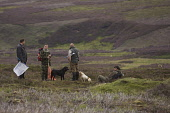 Grouse beaters having a rest between drives during a grouse shoot, Highlands of Scotland. Picture Credit: John MacTavish / Scottish Viewpoint  Tel: +44 (0) 131 622 7174  Fax: +44 (0) 131 622 7175  E-M... Public, NMR people,shooting,sport,heather