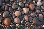 Pebbles on a beach in Angus  Picture Credit: Allan Coutts / Scottish Viewpoint Tel: +44 (0) 131 622 7174   Fax: +44 (0) 131 622 7175 E-Mail : info@scottishviewpoint.com Web: www.scottishviewpoint.com... Public Angus,beach,pebbles,rocks,tide,sea,water,colour,abstract,pretty,sizes,small,smooth,stones,assortment,variety,seaside