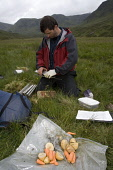 Carrots and potatoes used to bait upland water vole (Arvicola terrestris) as part of conservation project, Scotland.  Picture Credit: Peter Cairns / Scottish Viewpoint Tel: +44 (0) 131 622 7174   Fax:... Public, NMR Aberdeen University,Cairngorms Water Vole Conservation Project,July,Peter Cairns,Professor Xavier Lambin,Scotland,arvicola terrestris,biology,conservation,declining,human,knowledge,mammal,mink,monitor