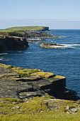 Northern coast of Orkney rocky seacliffs Brough of Birsay BIRSAY ORKNEY  Picture Credit: D. Houghton / Scottish Viewpoint Tel: +44 (0) 131 622 7174   Fax: +44 (0) 131 622 7175 E-Mail : info@scottishvi... Public northern,coast,orkney,seacliffs,birsay,seascapes,rocky,seascape,coastal,clifftop,seacliff,uk,seacoast,headland,head,land,peninsula,headlands,lands,peninsulas,line,coastline,sea,coasts,coastlines,seaco