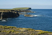 Northern coast of Orkney rocky seacliffs Brough of Birsay BIRSAY ORKNEY  Picture Credit: D. Houghton / Scottish Viewpoint Tel: +44 (0) 131 622 7174   Fax: +44 (0) 131 622 7175 E-Mail : info@scottishvi... Public northern,coast,orkney,seacliffs,birsay,seascape,rocky,coastal,clifftop,seacliff,uk,seascapes,seacoast,headland,head,land,peninsula,headlands,lands,peninsulas,line,coastline,sea,coasts,coastlines,seaco