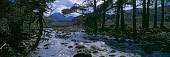 Native pines by the River Grudie at Bridge of Grudie, Wester Ross.  The summit of Beinn Eighe, Ruadh-stac Mor (1010m), and Sail Mhor (981m, another of Beinn Eighe's peaks), are in the background.  Pic... Public Scotland,Scottish,Highlands,Munros,mountains,hills,peaks,river,rapids,stream,boulders,rocks,crags,cliffs,trees,pine,native,Scots,wild,wilderness,walking,climbing,mountaineering,trekking,backpacking,ou