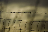Barbed wire fence Picture Credit : Andrew Wilson / Scottish Viewpoint Tel: +44 (0) 131 622 7174   Fax: +44 (0) 131 622 7175 E-Mail : info@scottishviewpoint.com This photograph can not be used without... Public Barb Wire,Barb Wires,Barbed Wire,Barbed Wires,Barbedwire,Barbedwires,Barbwire,Barbwires,Climate,Fence,Fenced,Fences,Season,Seasons,Weather,Winter,Wintery,Wintry