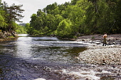 Lone salmon fisherman on the River Findhorn near Forres in Moray. Picture Credit : Laurence Leech / Scottish Viewpoint Tel: +44 (0) 131 622 7174   Fax: +44 (0) 131 622 7175 E-Mail : info@scottishviewp... Public highlands,highland,scotland,Angling,angler,cast,casting,water,summer,sunny,activity