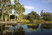 Pond at Logan Botanic Garden, Rhinns of Galloway, Dumfries and Galloway. Picture Credit: Allan Wright / Scottish Viewpoint Tel: +44 (0) 131 622 7174   Fax: +44 (0) 131 622 7175 E-Mail : info@scottishv... Public agricultural,bench,blue sky,bright,dumfies and galloway,Dumfries & Galloway,Galloway,garden,grass,lillies,machars,palm trees,plants,pond,scotland,summer,summer seat,sunny,trees,white clouds,wigtownshi