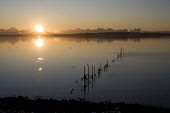 Salmon net stakes, Wigtown Bay at sunset, Creetown, Dumfries and Galloway. Picture Credit: Allan Wright / Scottish Viewpoint Tel: +44 (0) 131 622 7174   Fax: +44 (0) 131 622 7175 E-Mail : info@scottis... Public atmospheric,bay,birds,clouds,coast,dramatic,dumfries and galloway,Galloway,horizon,scotland,scottish,sea,shore,solway firth,south west scotland,stake net,sunset,wigtownshire