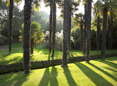 Sunlight through palm trees, Logan Botanic Garden, Dumfries and Galloway. Picture Credit: Allan Wright / Scottish Viewpoint Tel: +44 (0) 131 622 7174   Fax: +44 (0) 131 622 7175 E-Mail : info@scottish... Public agricultural,atmospheric,bright,bushes,dramatic,dry,dumfries and galloway,Galloway,garden,grass,off shoot,out station,palm trees,royal botanic garden,scotland,scottish,south west scotland,summer,sunny