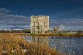 Threave Castle with dramatic dark and swans swimming past, Dumfries and Galloway. Picture Credit: Allan Wright / Scottish Viewpoint Tel: +44 (0) 131 622 7174   Fax: +44 (0) 131 622 7175 E-Mail : info@... Public 1370,14th centuary,3rd earl of douglas,agricultural,ancient,Archibald Douglas,archibald the grim,atmospheric,azure,battlements,beautiful,birds,black douglas,blue,blue sky,boat,bright,brooding,castle,c