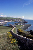 Portpatrick view from coastal path, Rhinns of Galloway, Dumfries and Galloway. Picture Credit: Allan Wright / Scottish Viewpoint Tel: +44 (0) 131 622 7174   Fax: +44 (0) 131 622 7175 E-Mail : info@sco... Public blue sky,boat,bright,cars,cliffs,coast,colourful,daffodils,dry,dyke,field,flowers,Galloway,grass,harbour,houses,machars,mooring,moorings,path,people,pier,port,Portpatrick,Rhinns of Galloway,road,rocks
