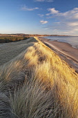 Sunrise at Montrose beach looking towards St Cyrus National Nature Reserve. The dunes, grassland and cliff environments are an essential enviroment to many creatures.  Picture Credit: Allan Coutts / S... Public Montrose,St Cyrus,Angus,east coast,beach,coast,coastal,colour,dawn,red,rocks,sandstone,sand,sea,sunrise,waves,nature reserve,dune,dunes,grassland,birds,wildlife,butterflies,leisure,walking,rambler,saf