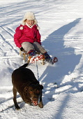A young child sledging with the family pet during adverse weather conditions, Muirhead, North Lanarkshire. Picture Credit: Garry McHarg / Scottish Viewpoint Tel: +44 (0) 131 622 7174   Fax: +44 (0) 13... Public, MR winter,sunny,cold,freezing,snow,kids,sledge,smile,play,enjoy,happy,dog,girl