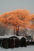Snow covered trees catch the early morning sunrise during adverse weather conditions, Muirhead, North Lanarkshire. Picture Credit: Garry McHarg / Scottish Viewpoint Tel: +44 (0) 131 622 7174   Fax: +4... Public winter,sunny,cold,weather,countryside,sheds,garages,frost,frosty