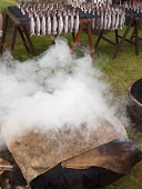Arbroath Smokies Cooking at the Scottish Garden Show, Ingliston, Edinburgh Picture Credit: Ian Paterson / Scottish Viewpoint Tel: +44 (0) 131 622 7174   Fax: +44 (0) 131 622 7175 E-Mail : info@scottis... Public Arbroath,Highland,Old,Royal,Scotland,Scottish,Show,UK,Whisky,barrel,coast,cook,cooking,delicacy,east,fish,fishes,food,haddock,half,hessian,historical,manner,method,portrait,sack,sacks,seafood,smoke,sm