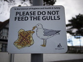 A Do Not Feed the Gulls Sign at the Seafront in Largs, North Ayrshire. Picture Credit: Ian Paterson / Scottish Viewpoint Tel: +44 (0) 131 622 7174   Fax: +44 (0) 131 622 7175 E-Mail : info@scottishvie... Public Ayrshire,Largs,North,Scotland,UK,and,bird,chips,council,do,eat,eating,feed,fries,gulls,health,not,resort,safety,seagull,seaside,sign,signpost,the,warning