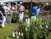 Shopping for Plants at the Scottish Garden Show, Edinburgh Picture Credit: Ian Paterson / Scottish Viewpoint Tel: +44 (0) 131 622 7174   Fax: +44 (0) 131 622 7175 E-Mail : info@scottishviewpoint.com T... Public Edinburgh,Ingliston,Scotland,Scottish,Show,buy,buying,choosing,flowers,garden,gardening,looking,outdoors,outside,people,plants,puchasing,purchase,shop,shopping,summer,sunny,warm