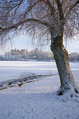 Looking across frozen Loch to Linlithgow Palace, Scotland, December, 2010 Pic: D. Barnes / Scottish Viewpoint  Tel: +44 (0) 131 622 7174  Fax: +44 (0) 131 622 7175  E-Mail : info@scottishviewpoint.com... Public Vertical,Linlithgow,palace,snow,snowscape,ice,loch,Peel,frozen,swans,ducks,winter,sunny,west,lothian,Scotland,UK,United,Kingdom,historic,Travel,heritage,tourist,Attraction,Tourism,Visitor