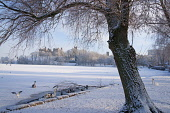 Looking across frozen Loch to Linlithgow Palace, Scotland, December, 2010 Pic: D. Barnes / Scottish Viewpoint  Tel: +44 (0) 131 622 7174  Fax: +44 (0) 131 622 7175  E-Mail : info@scottishviewpoint.com... Public Linlithgow,palace,snow,snowscape,ice,loch,Peel,frozen,swans,ducks,winter,sunny,west,lothian,Scotland,UK,United,Kingdom,historic,Travel,heritage,tourist,Attraction,Tourism,Visitor
