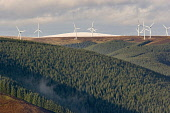Bowbeat Wind Farm, Moorfoot Hills, Scottish Borders Picture Credit : Jason Baxter / Scottish Viewpoint  Tel: +44 (0) 131 622 7174  Fax: +44 (0) 131 622 7175  E-Mail : info@scottishviewpoint.com  Web:... Public windfarm,forest,forestry,green,eco,energy,renewable,scotland,clean,nature,natural,resource,autumn,sunny,turbine,turbines