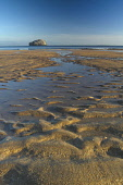 Bass Rock from Seacliff near North Berwick on the East Lothian Coastline, Scotland Picture Credit : Keith Fergus / Scottish Viewpoint  Tel: +44 (0) 131 622 7174  Fax: +44 (0) 131 622 7175  E-Mail : in... Public Bass Rock,Seacliff,Dawn,Sunrise,Beach,Coast,Coastline,East Lothian Coastline,RSPB,Bird Sanctuary,Visitor Attraction,Tourism,North Berwick,East Lothian,Scotland,UK,United Kingdom
