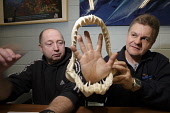 A dive students examine the jaws of a Sand Tiger shark during the PADI Shark Awareness Course at Deep Sea World, North Queensferry, Fife, Scotland. Picture Credit : Gary Doak / Scottish Viewpoint  Tel... Public Carcharias taurus,teeth,classroom,course,learn,learning,study,studying,attraction,visitor,swimming