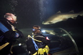 Sand Tiger shark (Carcharias taurus) in the aquarium at North Queensferry, Fife, Scotland. Picture Credit : Gary Doak / Scottish Viewpoint  Tel: +44 (0) 131 622 7174  Fax: +44 (0) 131 622 7175  E-Mail... Public aquarium,attraction,visitor,swimming,diver,divers