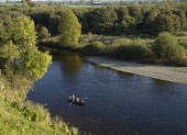 Fly fishing on the River Tweed near Coldstream, Scottish Borders. Picture Credit : Allan Wright / Scottish Viewpoint  Tel: +44 (0) 131 622 7174  Fax: +44 (0) 131 622 7175  E-Mail : info@scottishviewpo... Public autumn,sunny,activity,angling,beautiful,boat,fisherman,fishermen,idyllic,natural,nature,peace,peaceful,people,relax,relaxing,riverbank,rowing,salmon,scotland