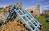 Farm Museum CORRIGALL ORKNEY Hens sitting on straw farmhouse buildings Picture Credit: Doug Houghton / Scottish Viewpoint Tel: +44 (0) 131 622 7174   Fax: +44 (0) 131 622 7175 E-Mail : info@scottishvi... Public orkney,corrigall,farm,museum,scotland,scottish,farmhouse,homestead,dwelling,place,abode,farming,rural,agricultural,agriculture,building,buildings,traditional,agronomy,cultivate,historical,historic,his