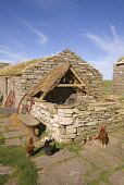 Farm Museum CORRIGALL ORKNEY Hen house on side of Farmhouse buildings Picture Credit: Doug Houghton / Scottish Viewpoint Tel: +44 (0) 131 622 7174   Fax: +44 (0) 131 622 7175 E-Mail : info@scottishvie... Public farm,museum,hen,house,poultry,tourist,attraction,scotland,scottish,outhouse,out,tradition,tourism,sight,site,outside,outdoors,tools,traditional,rural,farming,agricultural,agriculture,agronomy,cultivat