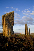 RING OF BRODGAR ORKNEY Neolithic standing stones henge circle with heather Picture Credit: Doug Houghton / Scottish Viewpoint Tel: +44 (0) 131 622 7174   Fax: +44 (0) 131 622 7175 E-Mail : info@scotti... Public ring,brodgar,standing,stone,historic,scotland,site,scottish,megaliths,menhirs,monolithic,henge,bronze,age,ancient,old,primitive,traditional,customs,cultural,brogar,unesco,world,heritage,visitor,attrac