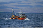 Swanbister Bay SCAPA FLOW ORKNEY Crab Lobster fishermens boat sailing between creels Picture Credit: Doug Houghton / Scottish Viewpoint Tel: +44 (0) 131 622 7174   Fax: +44 (0) 131 622 7175 E-Mail : i... Public orkney,scapa,flow,fisherman,boat,fishing,lobsters,scotland,scottish,coastal,fishery,industry,outdoors,local,activity,activities,maritime,sea,vessel,traditional,creel,lobster,fisher,man,crab,crabs,fish