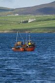 Swanbister Bay SCAPA FLOW ORKNEY Crab Lobster fishermens boat fisherman pulling up creels Picture Credit: Doug Houghton / Scottish Viewpoint Tel: +44 (0) 131 622 7174   Fax: +44 (0) 131 622 7175 E-Mai... Public orkney,scapa,flow,bay,fisherman,boat,pulling,creel,scotland,scottish,coastal,fishery,industry,outdoors,fishing,local,activity,activities,maritime,sea,vessel,traditional,fisher,man,catch,haul,hauling,u