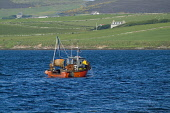 Swanbister Bay SCAPA FLOW ORKNEY Crab Lobster fishermens boat fisherman pulling up creels Picture Credit: Doug Houghton / Scottish Viewpoint Tel: +44 (0) 131 622 7174   Fax: +44 (0) 131 622 7175 E-Mai... Public orkney,scapa,flow,swanbister,bay,scotland,scottish,coastal,fishery,industry,outdoors,fishing,boat,local,activity,activities,maritime,sea,vessel,traditional,creel,lobster,fisherman,fisher,man,catch,hau