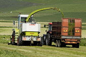 Kirbister STROMNESS AREA ORKNEY Silage harvesting combine harvester tractor and grass trailer Picture Credit: Doug Houghton / Scottish Viewpoint Tel: +44 (0) 131 622 7174   Fax: +44 (0) 131 622 7175 E... Public silage,harvesting,combine,harvester,tractor,grass,scotland,scottish,fodder,animal,feed,harvest,agricultural,agriculture,green,fields,land,outside,outdoors,cut,cutting,reaping,reap,arable,agronomy,coun