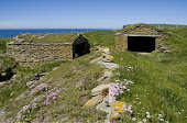 Sand Geo BIRSAY ORKNEY Fishermens huts Sea pinks Thrift Armeria maritima on hut roof Picture Credit: Doug Houghton / Scottish Viewpoint Tel: +44 (0) 131 622 7174   Fax: +44 (0) 131 622 7175 E-Mail : i... Public orkney,birsay,sand,geo,scotland,scottish,seapinks,thrift,rock,rose,flora,flowers,spring,time,springtime,flowering,marine,plant,coast,coastal,coastline,seashore,shore,shoreline,line,wild,life,wildlife,