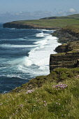 North coast sea pinks seacliffs surf waves breaking Skea Point  BIRSAY ORKNEY Picture Credit: Doug Houghton / Scottish Viewpoint Tel: +44 (0) 131 622 7174   Fax: +44 (0) 131 622 7175 E-Mail : info@sco... Public surf,waves,seacliffs,birsay,orkney,north,coast,sea,cliffs,pinks,breaking,skea,point,scotland,line,uk,seawaves,water,seacoasts,orkneys,coastal,scottish,seacoast,coastline,seascape,coasts,coastlines,wes
