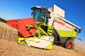 Harvesting Barley crops sown in wintertime on Overwells Farm in the Scottish Borders Picture Credit : Jason Baxter / Scottish Viewpoint Tel: +44 (0) 131 622 7174   Fax: +44 (0) 131 622 7175 E-Mail : i... Public harvest,summer,combine,harvestor,field,agriculture,sunny,farming,farm,rural,lifestyle,harvesting,barley,scottish,borders,cultivator,wheat,processing,crop,crops,agricultural,overwells,scotland