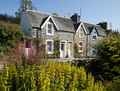 Cottages, New Galloway, Dumfries and Galloway. Picture Credit: Allan Wright / Scottish Viewpoint Tel: +44 (0) 131 622 7174   Fax: +44 (0) 131 622 7175 E-Mail : info@scottishviewpoint.com This photogra... Public summer,sunny,flowers,granite,houses,housing,terrace,road,roadside