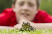 Toad (Bufo bufo)  in garden with young boy looking on, Scotland. Picture Credit : Peter Cairns / Scottish Viewpoint Tel: +44 (0) 131 622 7174   Fax: +44 (0) 131 622 7175 E-Mail : info@scottishviewpoin... Public Cairngorms National Park,Peter Cairns,Scotland,adult,amphibian,bufo bufo,encounter,experience,garden,looking,nature,summer.,toad,watching,wildlife,young boy