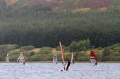 Windsurfing competition on St Mary's Loch in the Scottish Borders. Picture Credit : Jason Baxter / Scottish Viewpoint Tel: +44 (0) 131 622 7174   E-Mail : info@scottishviewpoint.com This photograph ca... Public 2011,summer,sunny,marys,mary,water,sport,watersport,activity,compete,sails,windsurf,hobby,enjoyment,trees,forestry,people,windsurfer,windsurfers