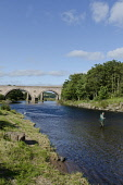 Fishing on the River North Esk, near Montrose, Angus. Picture Credit : Allan Wright / Scottish Viewpoint Tel: +44 (0) 131 622 7174   E-Mail : info@scottishviewpoint.com This photograph cannot be used... Public summer,sunny,viaduct,water,transport,arch,arches,bridge,bridges,activity,angler