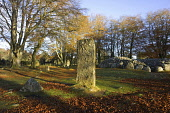 A standing stone by Clava Cairns, Highlands of Scotland.Picture Credit : Allan Wright / Scottish ViewpointTel: +44 (0) 131 622 7174  E-Mail : info@scottishviewpoint.comThis photograph cannot be used w... Public ancient,autumn,autumnal,bronze,age,circle,heritage,historic,leaves,attraction,chamber,tomb,corbelled,passage,sunny,cairn