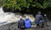 Tourists and photographers head to the famous Buchanty Spout in the course of the River Almond, near Crieff to watch the spectacle of wild Atlantic Salmon leaping waterfalls during their annual journe... Public, NMR 2011,people,autumn,nature,fauna,fow,gushing,leap,torrent,water,waterfall,photograph