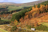 The A72 road through theTweed Vallley by Thornilee Plantation in the Scottish Borders. Picture Credit : Jason Baxter / Scottish Viewpoint Tel: +44 (0) 131 622 7174   E-Mail : info@scottishviewpoint.co... Public 2011,hills,hillside,rural,countryside,autumn,autumnal,sunny,trees,wood,woodland,forest,forestry,traffic,lorry,lorries,transport