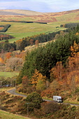 The A72 road through theTweed Vallley by Thornilee Plantation in the Scottish Borders. Picture Credit : Jason Baxter / Scottish Viewpoint Tel: +44 (0) 131 622 7174   E-Mail : info@scottishviewpoint.co... Public 2011,hills,hillside,rural,countryside,autumn,autumnal,sunny,trees,wood,woodland,forest,forestry,traffic,lorry,transport