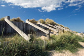 Sand dune support fences at Lossiemouth east beach, Moray. Picture Credit : Ross Graham / Scottish Viewpoint Tel: +44 (0) 131 622 7174   E-Mail : info@scottishviewpoint.com This photograph cannot be u... Public 2011,summer,sunny,defence,timber,erosion