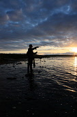 Midsummer fly fishing for trout on Harray Loch, Mainland, Orkney.Picture Credit : Mark Ferguson / Scottish ViewpointTel: +44 (0) 131 622 7174  E-Mail : info@scottishviewpoint.comThis photograph cannot... Public summer,isles,pursuit,Activity,Fisherman,Leisure,angler,atmospheric,silhouette,island,islands,angling, anglers,