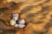 Strange rock formations at Clashach Cove on the Moray Firth, Moray. Picture Credit : Peter Scott / Scottish Viewpoint Tel: +44 (0) 131 622 7174   E-Mail : info@scottishviewpoint.com This photograph ca... Public 2011,summer,coast,coastal,atmospheric,detail,tecture,weathering,erosion,rock,rocks,stone,stones