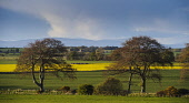 Countryside near the village of Nigg, Highlands of Scotland.   Picture Credit : Andrew Wilson / Scottish Viewpoint   Tel: +44 (0) 131 622 7174  E-Mail : info@scottishviewpoint.com  This photograph can... Public 2012,spring,sunny,agriculture,farming,crops,evening,trees,field,fields,hills