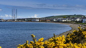The village of Cromarty on the shore of the Cromarty Firth, with the the fabrication yard at Invergordon visible beyond, Highlands of Scotland. Picture Credit : Andrew Wilson / Scottish Viewpoint   Te... Public 2012,spring,sunny,gorse,beach,pebble,shingle,housing water,coast,coastal,hill,hills,highland