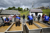 British Gold Panning Championships at Wanlockhead, Dumfries and Galloway. Picture Credit : Andrew Wilson / Scottish Viewpoint   Tel: +44 (0) 131 622 7174  E-Mail : info@scottishviewpoint.com  This pho... Public 2012,summer,event,people,competitors,hills,precious,metal,competition,water,international